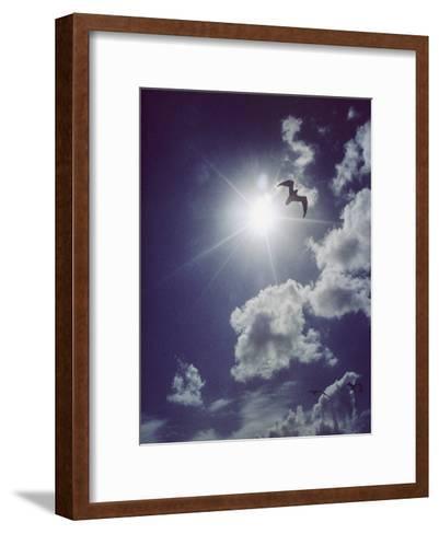 Gulls Silhouetted against the Sun-Emory Kristof-Framed Art Print