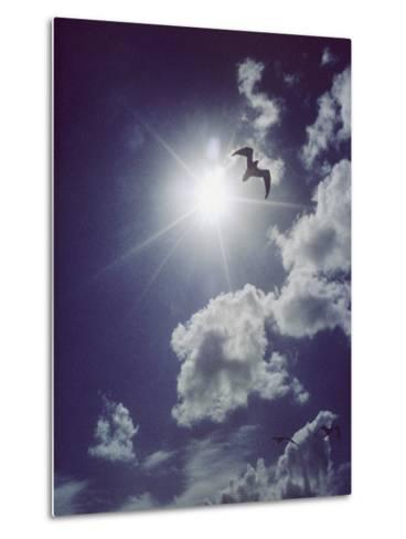 Gulls Silhouetted against the Sun-Emory Kristof-Metal Print