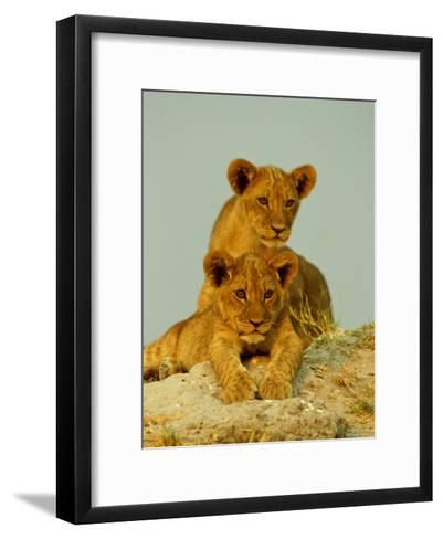 Two Lion Cubs Watch the Action from the Sidelines-Beverly Joubert-Framed Art Print