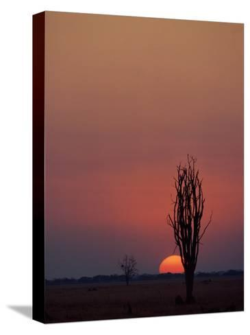 Sunset over the African Plain-Beverly Joubert-Stretched Canvas Print