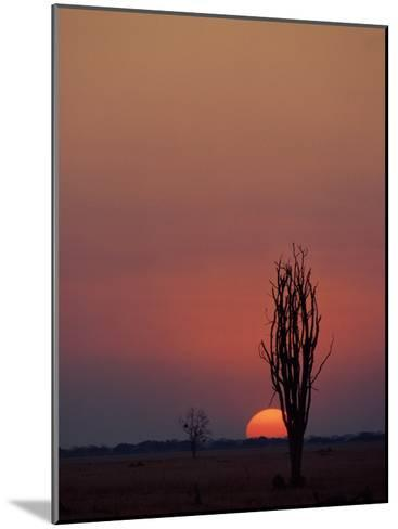 Sunset over the African Plain-Beverly Joubert-Mounted Photographic Print