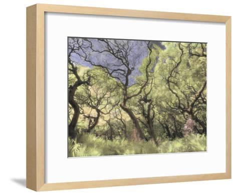 Oak Trees Stretch Gnarled Branches Skyward-Annie Griffiths Belt-Framed Art Print