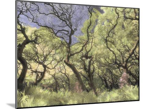 Oak Trees Stretch Gnarled Branches Skyward-Annie Griffiths Belt-Mounted Photographic Print