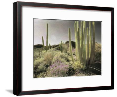 Wildflowers Bloom Among Cactus in a Desert Landscape-Annie Griffiths Belt-Framed Art Print