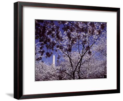 Cherries Hang on a Stem-Nicole Duplaix-Framed Art Print