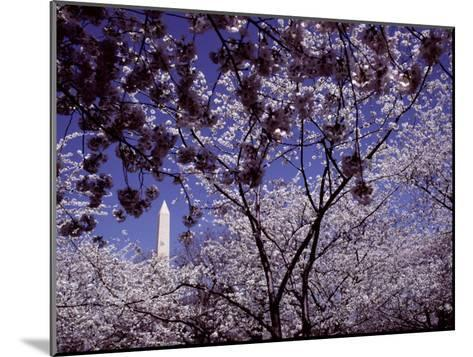 Cherries Hang on a Stem-Nicole Duplaix-Mounted Photographic Print