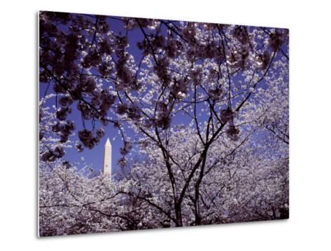 Cherries Hang on a Stem-Nicole Duplaix-Metal Print