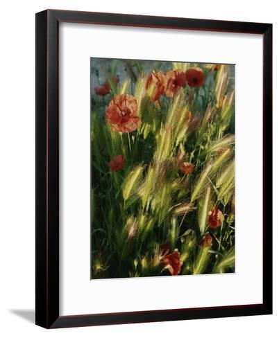 Wildflowers and Grass Tufts in Provence-Nicole Duplaix-Framed Art Print