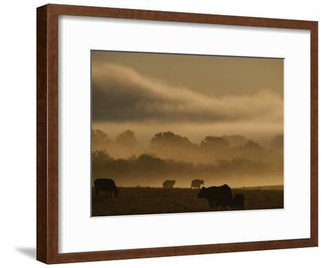 Cows are Silhouetted in a Field against Fog-Covered Trees at Dawn-Sam Kittner-Framed Art Print