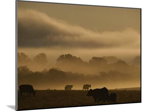 Cows are Silhouetted in a Field against Fog-Covered Trees at Dawn-Sam Kittner-Mounted Photographic Print