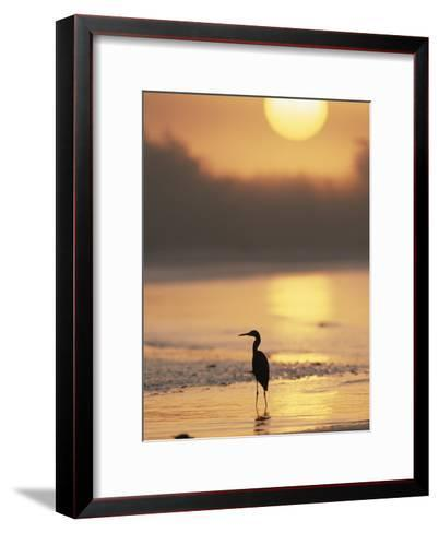 A Little Blue Heron Silhouetted on a Florida Beach at Sunrise-Roy Toft-Framed Art Print