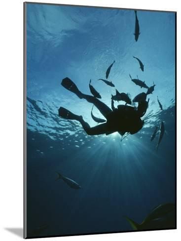 Fish Swim Around a Diver-Raul Touzon-Mounted Photographic Print