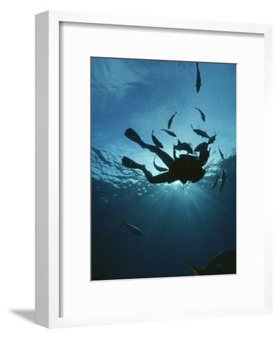 Fish Swim Around a Diver-Raul Touzon-Framed Art Print