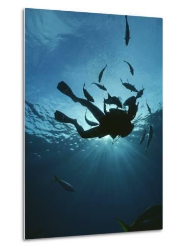 Fish Swim Around a Diver-Raul Touzon-Metal Print