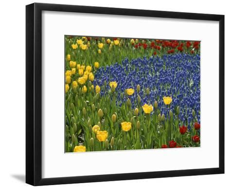 A Garden of Colorful Tulips and Grape Hyacinths in New York City-Raul Touzon-Framed Art Print