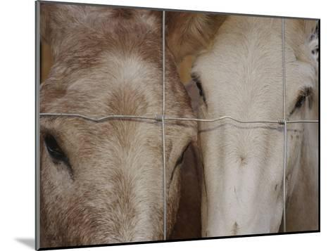 A Horse and a Mule Peer Through a Wire Fence-Raul Touzon-Mounted Photographic Print