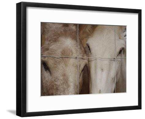 A Horse and a Mule Peer Through a Wire Fence-Raul Touzon-Framed Art Print