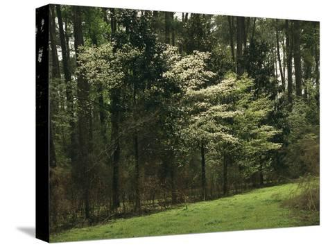 A Woodland View with Meadow and Blooming Trees in Spring-Raymond Gehman-Stretched Canvas Print