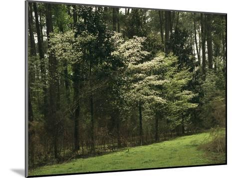 A Woodland View with Meadow and Blooming Trees in Spring-Raymond Gehman-Mounted Photographic Print