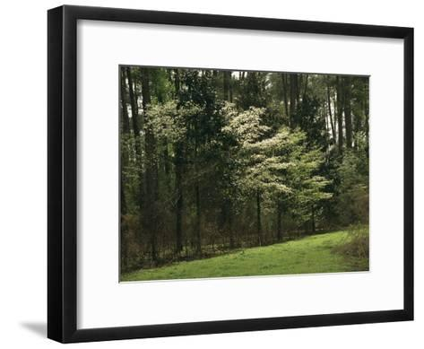 A Woodland View with Meadow and Blooming Trees in Spring-Raymond Gehman-Framed Art Print