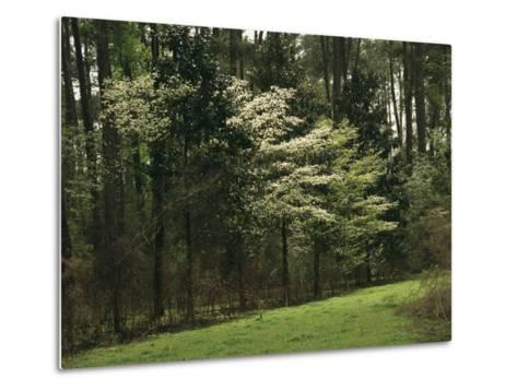 A Woodland View with Meadow and Blooming Trees in Spring-Raymond Gehman-Metal Print