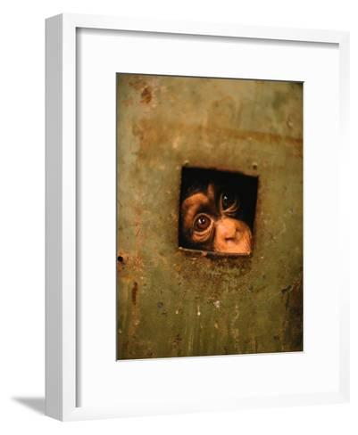 A Young Chimpanzee Held Captive in a Private Zoo in Monrovia-Michael Nichols-Framed Art Print