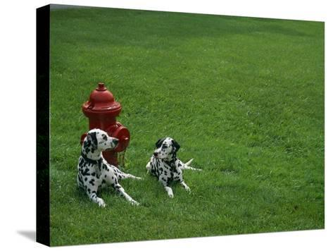 Two Dalmatians Sit on Green Grass near a Red Fire Hydrant-Nadia M^ B^ Hughes-Stretched Canvas Print