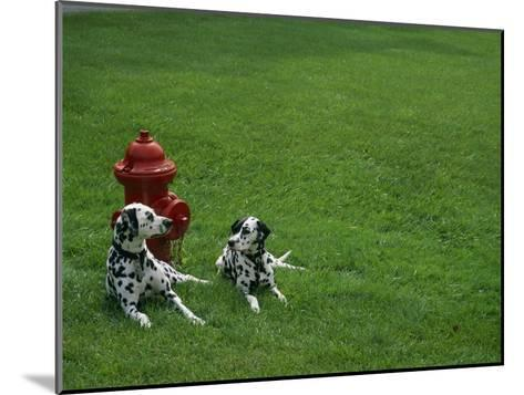 Two Dalmatians Sit on Green Grass near a Red Fire Hydrant-Nadia M^ B^ Hughes-Mounted Photographic Print