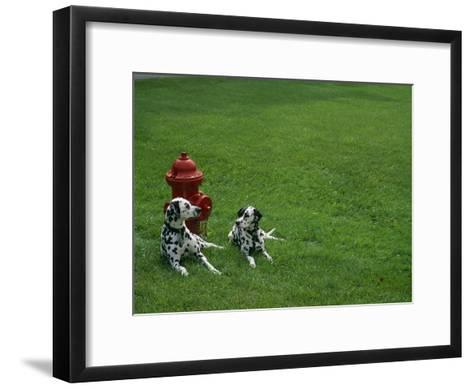 Two Dalmatians Sit on Green Grass near a Red Fire Hydrant-Nadia M^ B^ Hughes-Framed Art Print