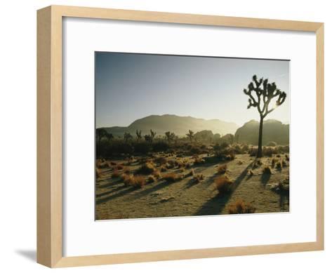 Silhouetted Joshua Trees at Twilight in the Desert-Kate Thompson-Framed Art Print