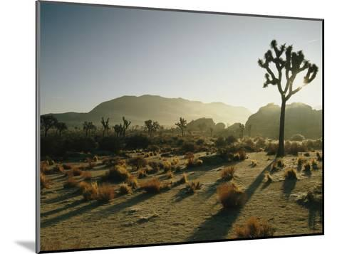 Silhouetted Joshua Trees at Twilight in the Desert-Kate Thompson-Mounted Photographic Print