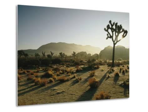 Silhouetted Joshua Trees at Twilight in the Desert-Kate Thompson-Metal Print