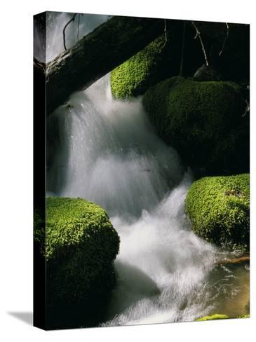 Creek Rushing Over Moss-Covered Stones-Marc Moritsch-Stretched Canvas Print