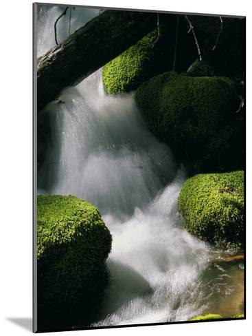 Creek Rushing Over Moss-Covered Stones-Marc Moritsch-Mounted Photographic Print