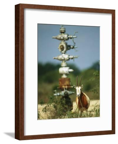 A Scimitar Horned Oryx Next to an Oil and Gas Well-Joel Sartore-Framed Art Print