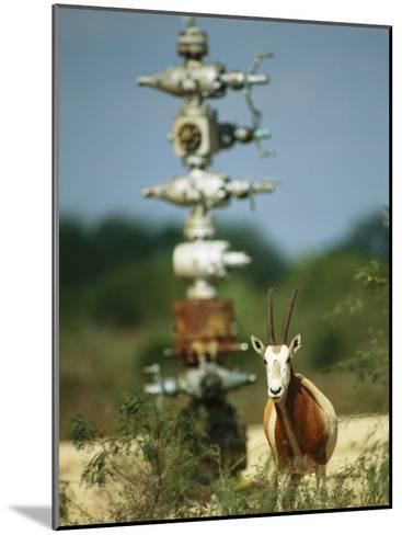 A Scimitar Horned Oryx Next to an Oil and Gas Well-Joel Sartore-Mounted Photographic Print