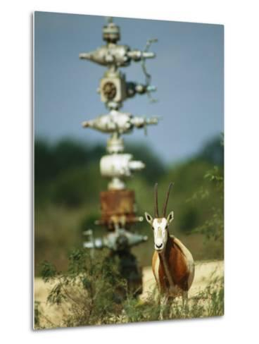 A Scimitar Horned Oryx Next to an Oil and Gas Well-Joel Sartore-Metal Print