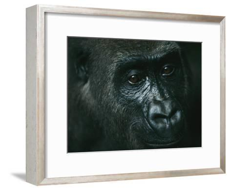 Portrait of a Gorilla-Michael Nichols-Framed Art Print