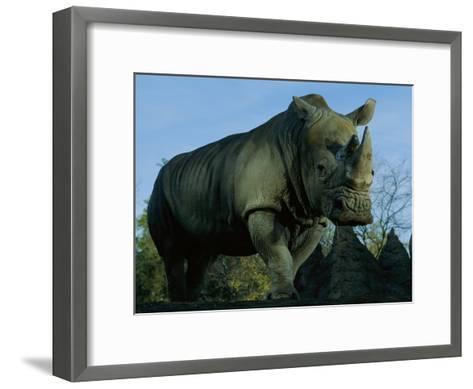 A Southern White Rhino at the San Diego Wild Animal Park-Michael Nichols-Framed Art Print