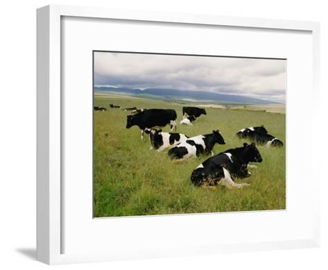 Holstein-Friesian Dairy Cows-George F^ Mobley-Framed Art Print