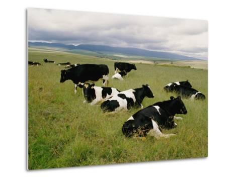 Holstein-Friesian Dairy Cows-George F^ Mobley-Metal Print