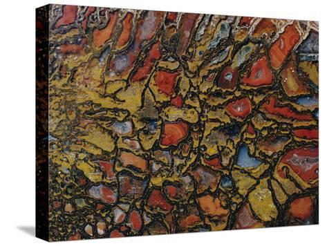 Close View of a Fossil-David Boyer-Stretched Canvas Print