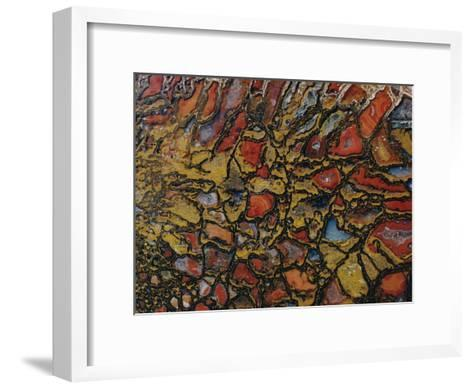 Close View of a Fossil-David Boyer-Framed Art Print