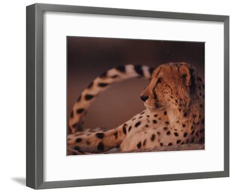 A Portrait of an African Cheetah Resting-Chris Johns-Framed Art Print