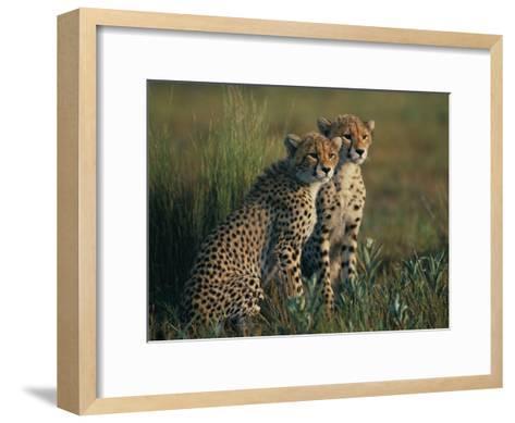 A Portrait of a Pair of Juvenile African Cheetahs-Chris Johns-Framed Art Print