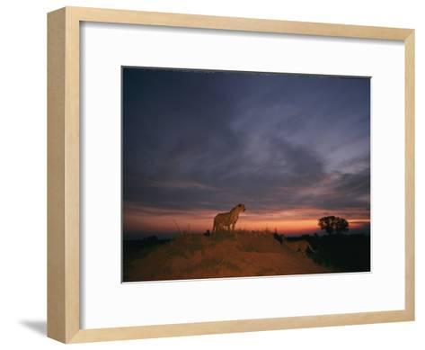 An African Cheetah Stands Majestically on a Large Mound in Front of a Beautiful Sunset-Chris Johns-Framed Art Print