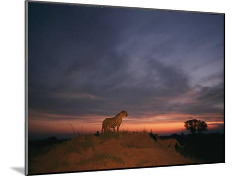 An African Cheetah Stands Majestically on a Large Mound in Front of a Beautiful Sunset-Chris Johns-Mounted Photographic Print