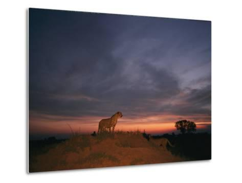An African Cheetah Stands Majestically on a Large Mound in Front of a Beautiful Sunset-Chris Johns-Metal Print