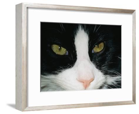 Close View of a Black and White Tabby Cat-Brian Gordon Green-Framed Art Print