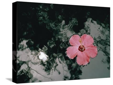 Hibiscus Flowers-Dick Durrance-Stretched Canvas Print